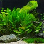 10 Low-Light Freshwater Aquarium Plants