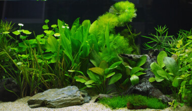 low light aquarium plant