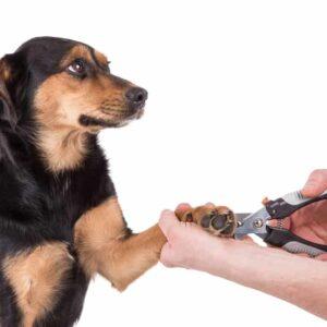 How Often Should I Cut My Dog's Nails?