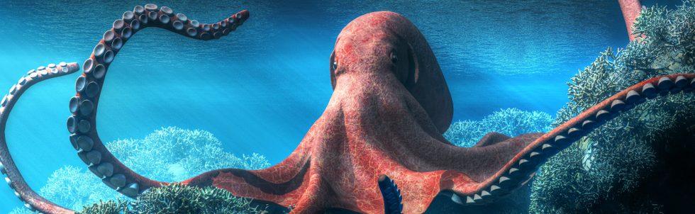 pet octopus king e1580755558692
