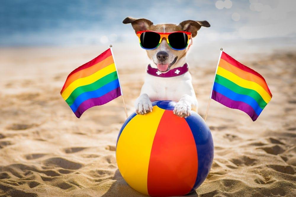 pride dog