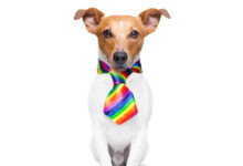 Can Dogs be Gay?