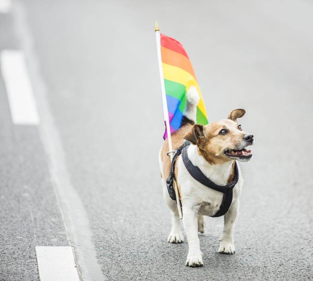 pride russel