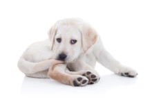 Reasons Why Your Dog Bites His Tail Until It Bleeds