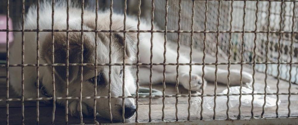 puppy in crate 1 e1582637691188