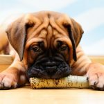 Why Do Dogs Chew On Wood?