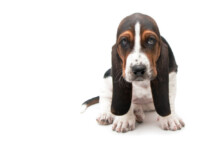What to Give a Dog With an Upset Stomach?