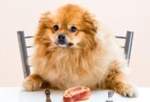 Can Dogs Eat T-Bone Steak & Is it Safe?