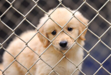 How To Stop Your Dog From Crying in the Crate?