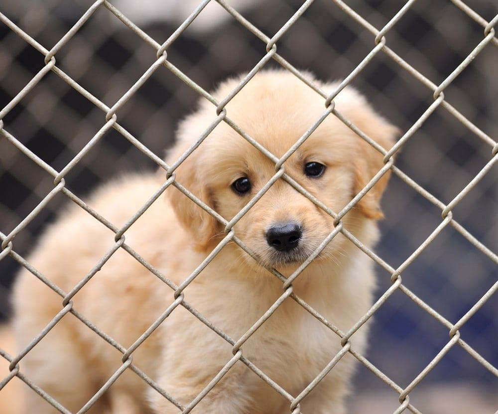 sad puppy behind crate