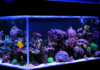 15 Popular Saltwater Fish for Beginners