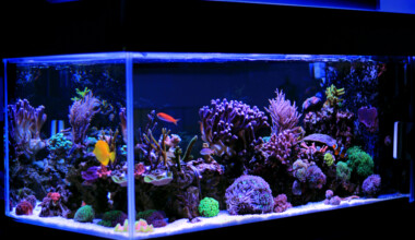 saltwater aquarium 1