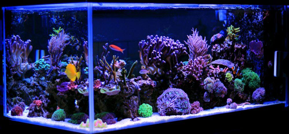 saltwater aquarium e1581006067913
