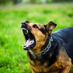 Top 10 Scariest Looking Dog Breeds
