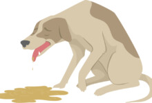 My Dog Keeps Retching But Not Being Sick - What to Do?