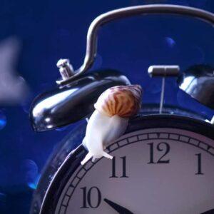 How Much Do Snails Really Sleep?