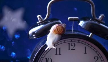 snail sleep clock