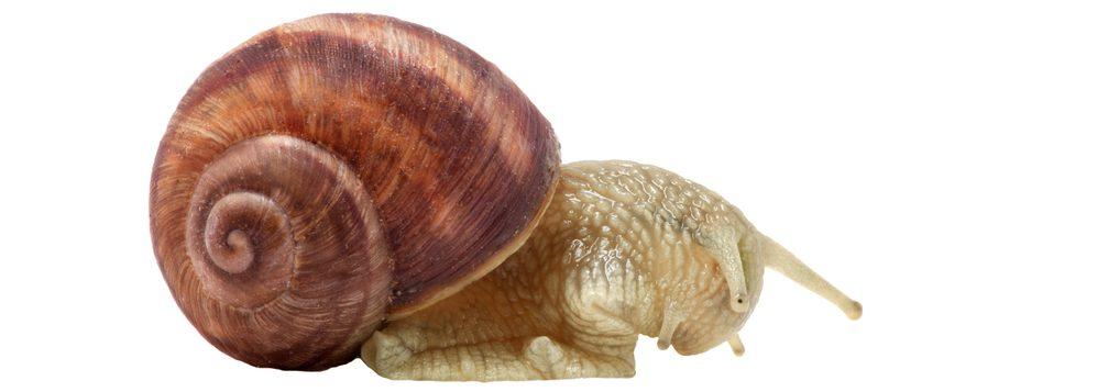 snail sleeps white background e1580934122472