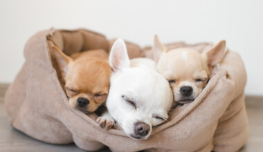 three dogs are sleeping in a bed
