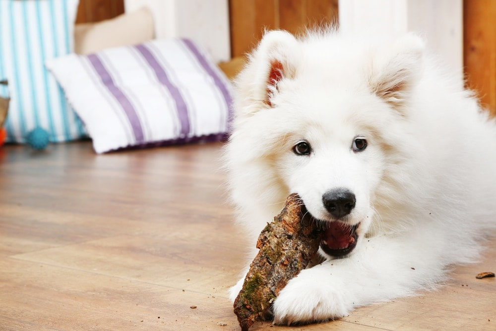white fluffy pup