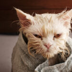 Do Cats Need Baths?