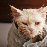 Do Cats Need Baths?