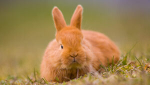 angry rabbit bite e1585394562210