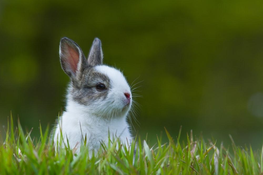 baby bunny wild