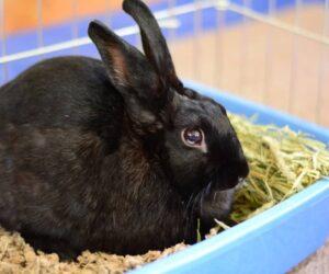 black rabbit litter box