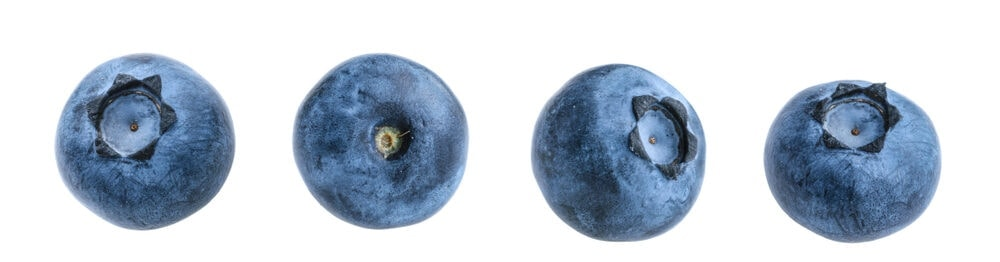blueberries white background e1583486079874