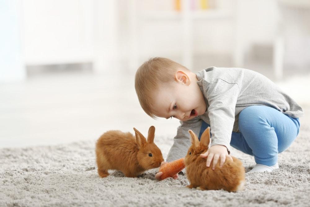 boy kid play rabbit