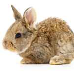 Baby Bunny Care Tips & Information