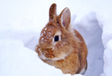 Caring for Pet Rabbits in Cold Weather