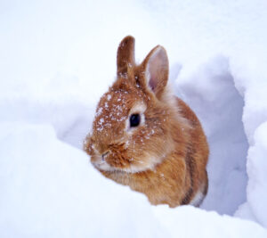 brown bunny snow