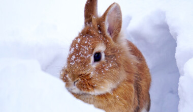 brown bunny snow