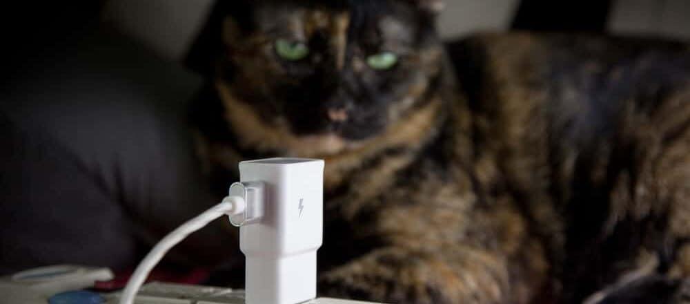 cat and plug e1584775508787