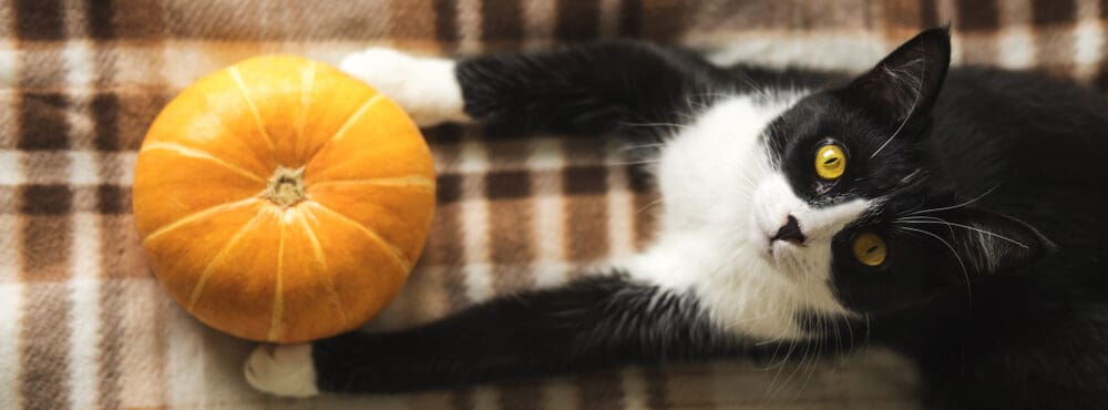 cat and pumpkin e1584775055460