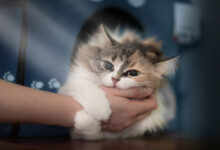 How To Treat Cat Bites?