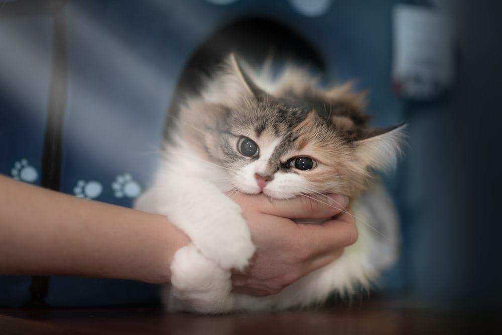 cat bites the owner