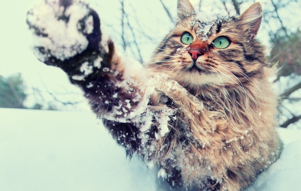 cat catching snow