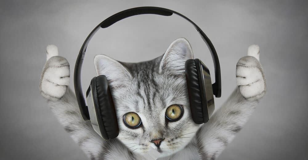 cat enjoy music 1 e1584774031993