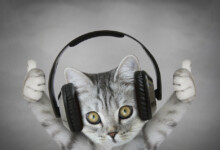 Why Do Some Cats Love Music?