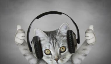 cat enjoy music