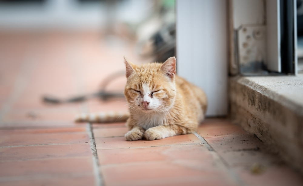 cat eye discharge
