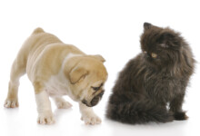 Do Cats Fart? - What You Need to Know