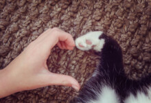 How to Show Your Cat You Love Them