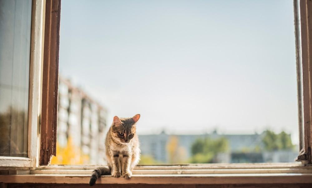 cat high window