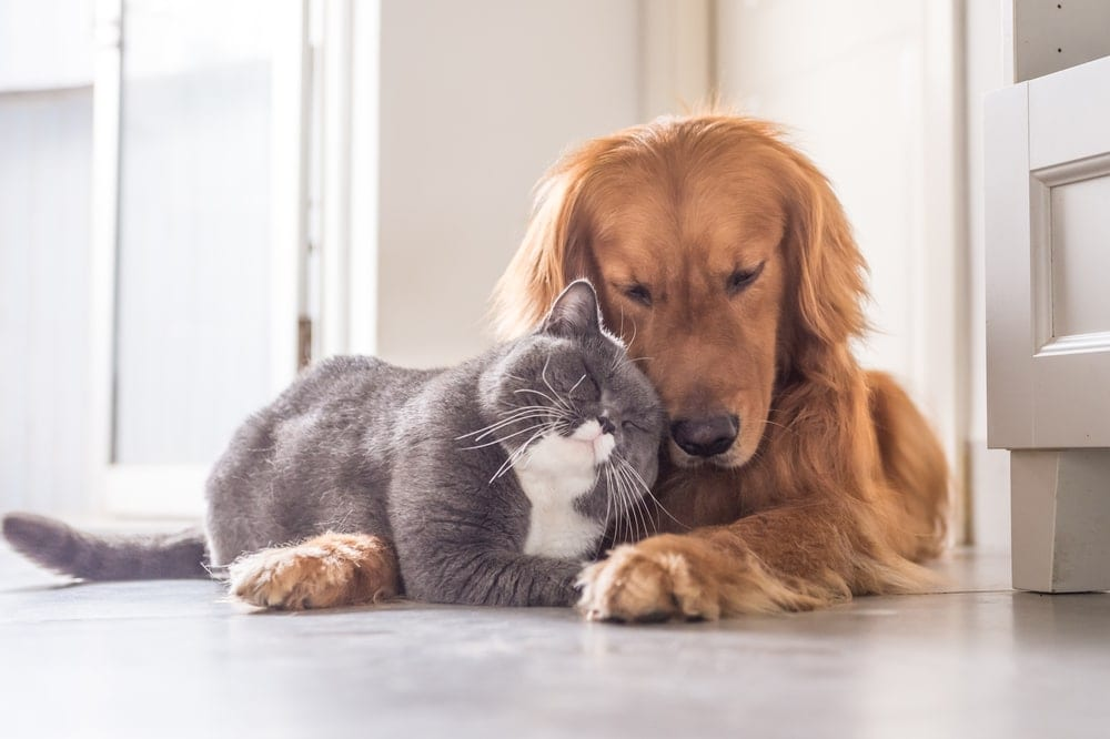 cat hugging the dog