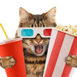 Can Cats Eat Popcorn?