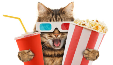 cat in the cinema